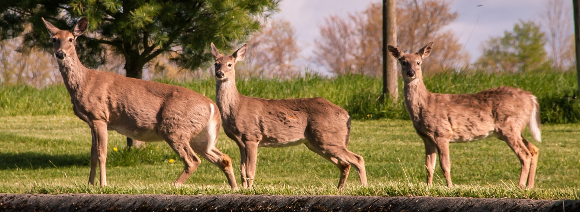 Would Deer Overpopulate Without Hunting?
